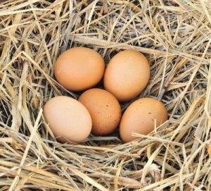 Eizellqualität verbessern. Eizellreserve sinkt mit dem Alter.